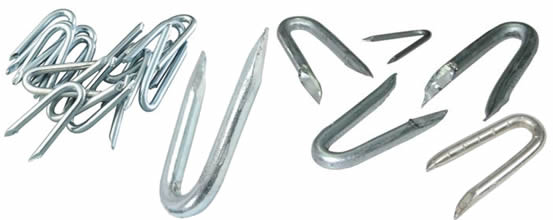 Many galvanised fence staples in different length and different diameters